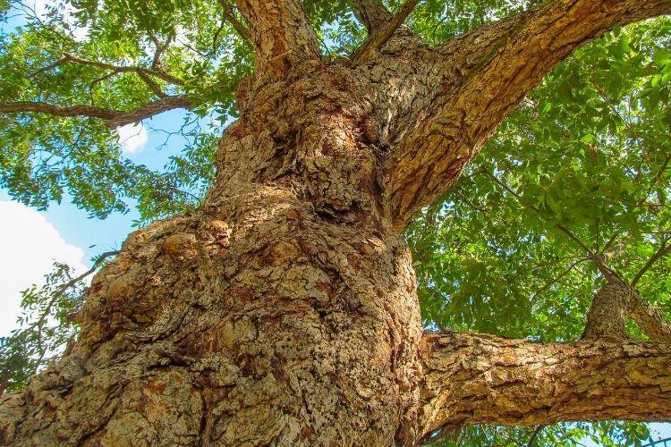 Woodworking Properties of Pecan