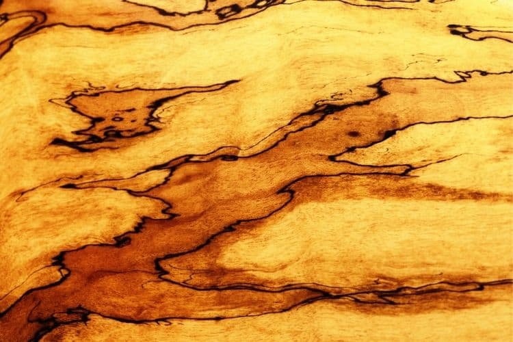 What is Spalted Maple